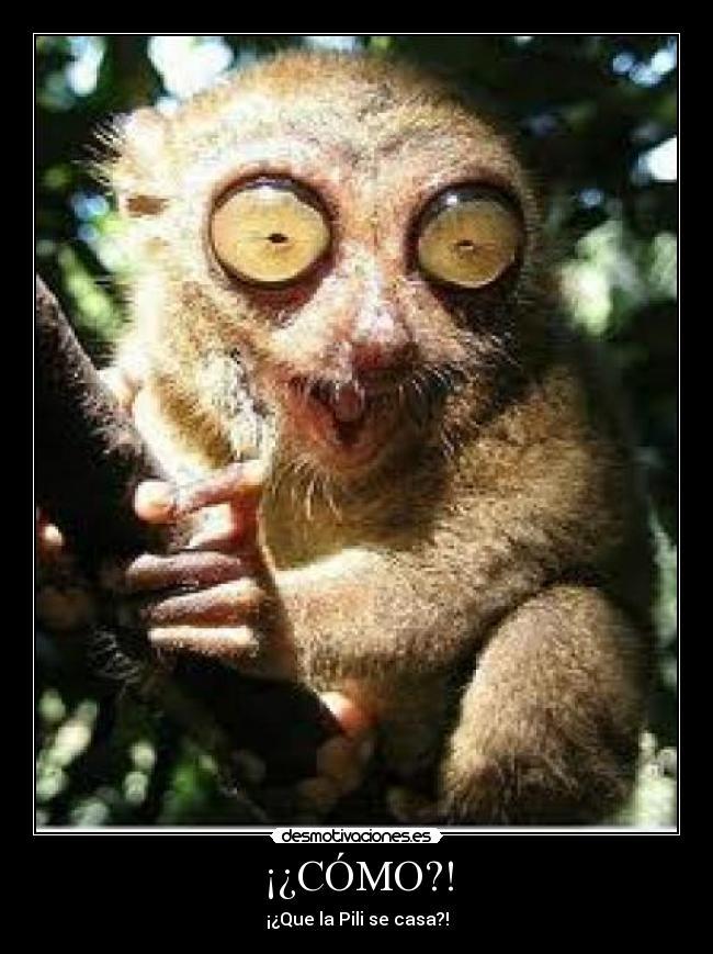 Pero que pasa hoy ¡¡¡¡¡¡¡¡¡¡ ClubSeiko WIN XD - Página 2 Lemur_1