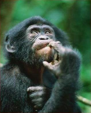 # DUVIDA CRUÉL # Macaco-pensando1