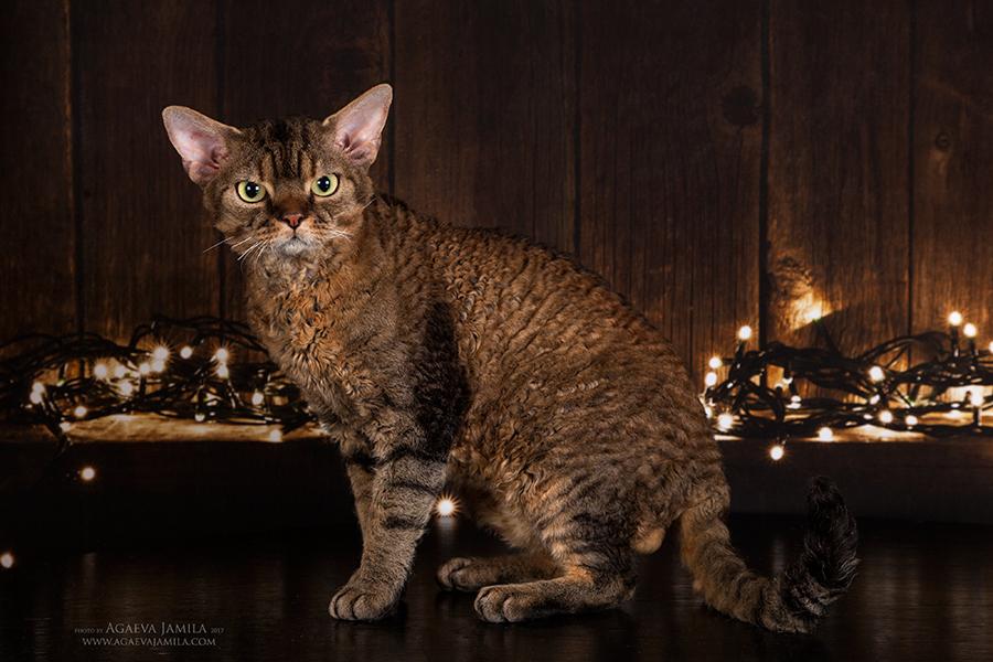 Котята в питомнике Larchik IMG_7153mini