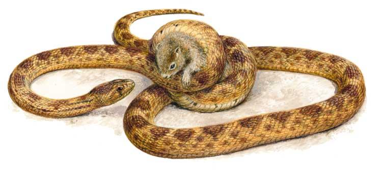 кто такие рептилии? 1556_004