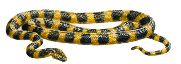 кто такие рептилии? 1556_022