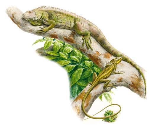 кто такие рептилии? 1556_036