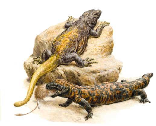 кто такие рептилии? 1556_038
