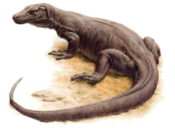 кто такие рептилии? 1556_039