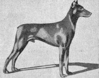 Зоо-ретро, Фотографии - какими они были...породы собак Post-169160-1331131829