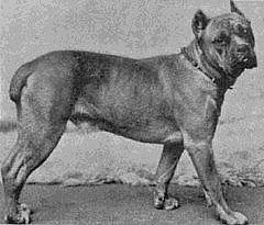 Зоо-ретро, Фотографии - какими они были...породы собак Post-169160-1331131955