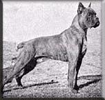 Зоо-ретро, Фотографии - какими они были...породы собак Post-169160-1331132007