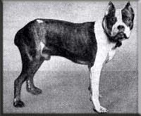 Зоо-ретро, Фотографии - какими они были...породы собак Post-169160-1331132013