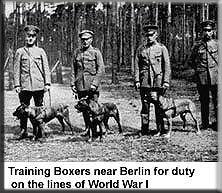 Зоо-ретро, Фотографии - какими они были...породы собак Post-169160-1331132051