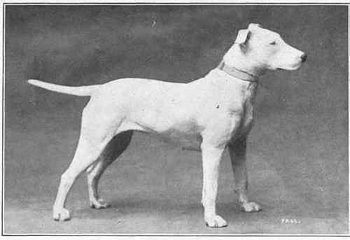 Зоо-ретро, Фотографии - какими они были...породы собак Post-169160-1331132332