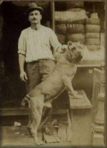 Зоо-ретро, Фотографии - какими они были...породы собак Post-169160-1331132436