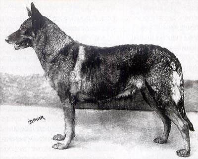 Зоо-ретро, Фотографии - какими они были...породы собак Post-169160-1331132473