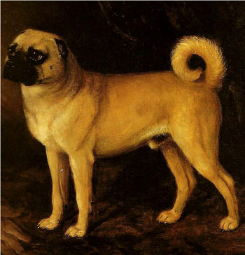 Зоо-ретро, Фотографии - какими они были...породы собак Post-169160-1331132559