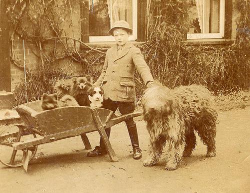Зоо-ретро, Фотографии - какими они были...породы собак Post-169160-1331132973