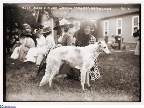 Зоо-ретро, Фотографии - какими они были...породы собак Post-169160-1331132984_thumb