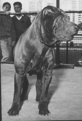 Зоо-ретро, Фотографии - какими они были...породы собак Post-169160-1331134584