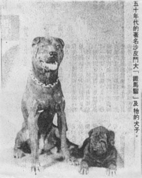 Зоо-ретро, Фотографии - какими они были...породы собак Post-169160-1331134596