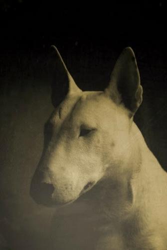 Зоо-ретро, Фотографии - какими они были...породы собак Post-169160-1331134910_thumb