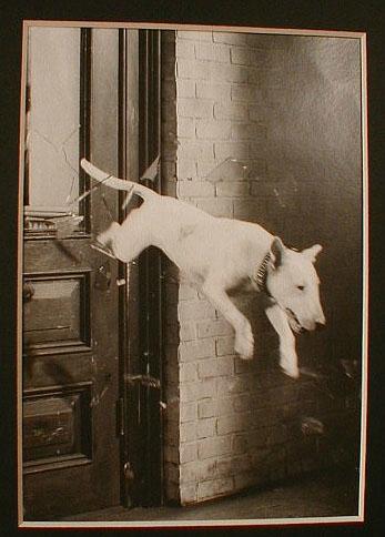Зоо-ретро, Фотографии - какими они были...породы собак Post-169160-1331134918