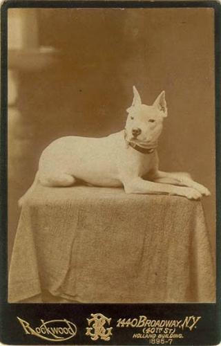 Зоо-ретро, Фотографии - какими они были...породы собак Post-169160-1331134922_thumb