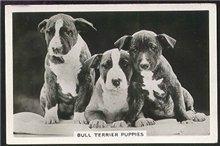 Зоо-ретро, Фотографии - какими они были...породы собак Post-169160-1331134935