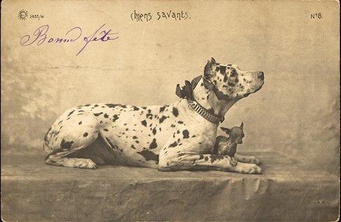 Зоо-ретро, Фотографии - какими они были...породы собак Post-169160-1331135894
