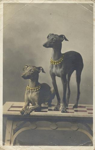 Зоо-ретро, Фотографии - какими они были...породы собак Post-169160-1331135899_thumb