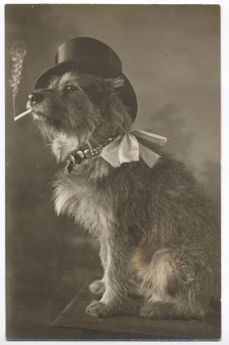 Зоо-ретро, Фотографии - какими они были...породы собак Post-169160-1331135903_thumb