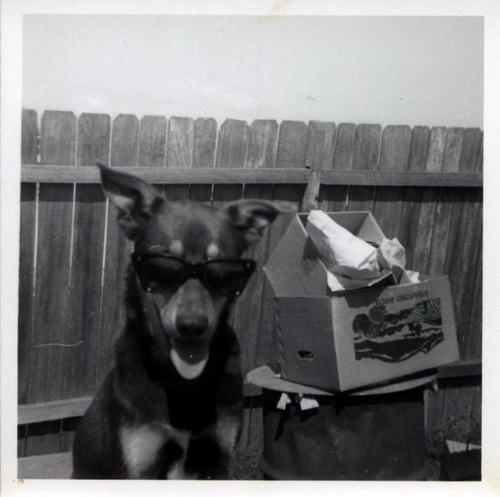 Зоо-ретро, Фотографии - какими они были...породы собак Post-169160-1331135906
