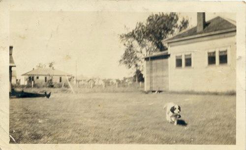 Зоо-ретро, Фотографии - какими они были...породы собак Post-169160-1331135910