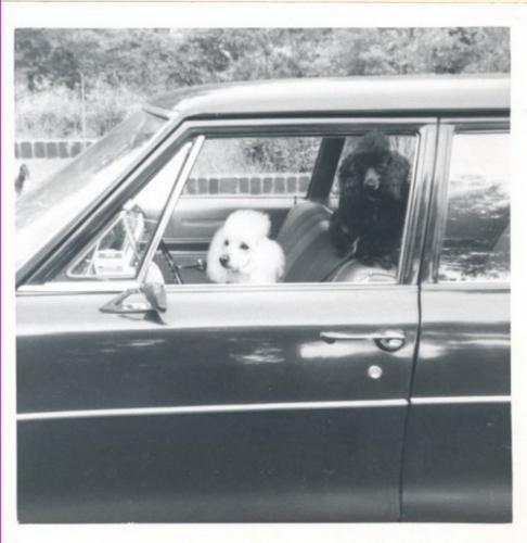 Зоо-ретро, Фотографии - какими они были...породы собак Post-169160-1331135924_thumb