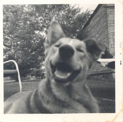 Зоо-ретро, Фотографии - какими они были...породы собак Post-169160-1331135931