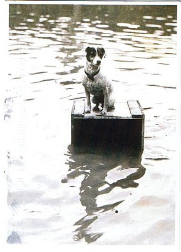 Зоо-ретро, Фотографии - какими они были...породы собак Post-169160-1331135935_thumb