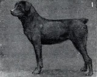 Зоо-ретро, Фотографии - какими они были...породы собак Post-169160-1331264931
