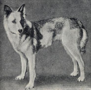 Зоо-ретро, Фотографии - какими они были...породы собак Post-169160-1331265067