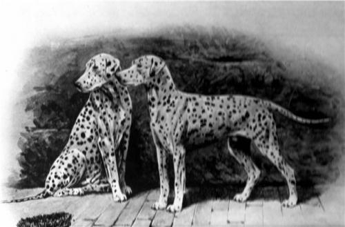 Зоо-ретро, Фотографии - какими они были...породы собак Post-169160-1331267834_thumb