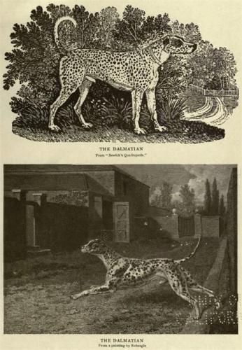 Зоо-ретро, Фотографии - какими они были...породы собак Post-169160-1331267871_thumb