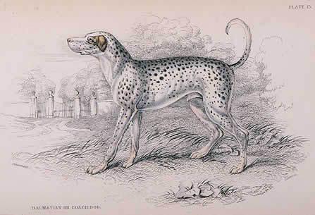 Зоо-ретро, Фотографии - какими они были...породы собак Post-169160-1331267895