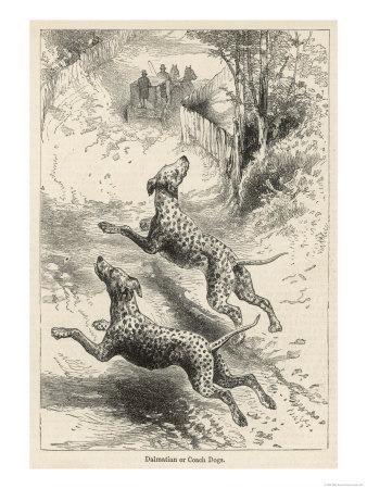 Зоо-ретро, Фотографии - какими они были...породы собак Post-169160-1331267918