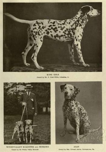 Зоо-ретро, Фотографии - какими они были...породы собак Post-169160-1331267979_thumb