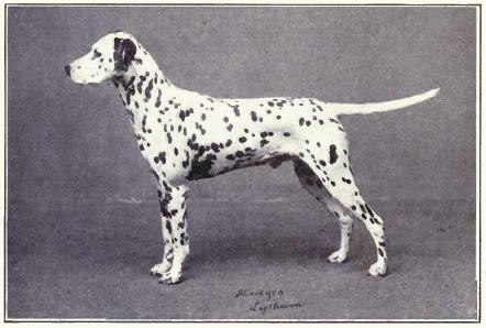 Зоо-ретро, Фотографии - какими они были...породы собак Post-169160-1331268013