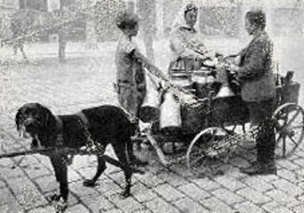 Зоо-ретро, Фотографии - какими они были...породы собак Post-191232-1333921720