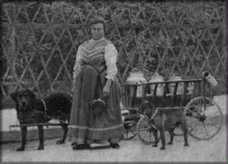 Зоо-ретро, Фотографии - какими они были...породы собак Post-191232-1333921732