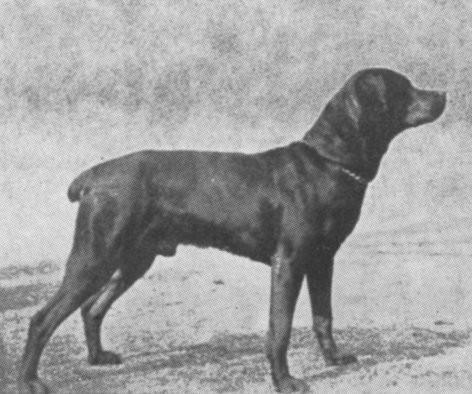 Зоо-ретро, Фотографии - какими они были...породы собак Post-191232-1333922161
