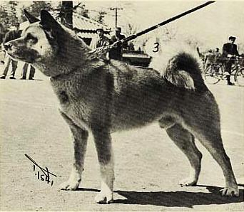 Зоо-ретро, Фотографии - какими они были...породы собак Post-89723-1335339616