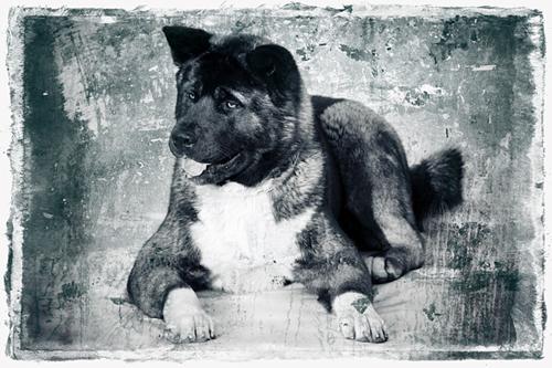Зоо-ретро, Фотографии - какими они были...породы собак Post-89723-1335339637