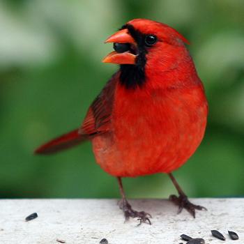 Ako sa dnes máš? 3 - Stránka 6 Bird-photography
