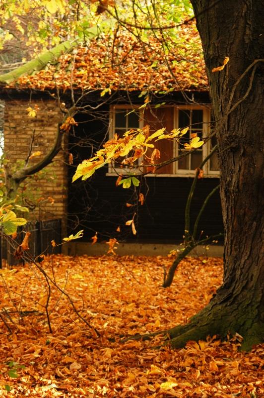 Jesen - Page 2 Autumn5