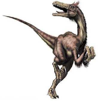 le raptor Velociraptor2