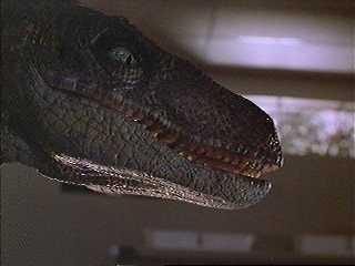le raptor Velociraptor5